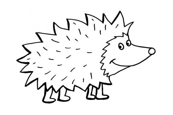 hedgehogs  sustainable living in the heatons